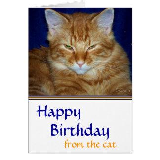 Crabby  Tabby Cat  Birthday Card - Funny