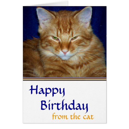 Crabby Tabby Cat Birthday Card - Funny