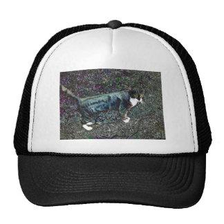 Crackers the Cat Mesh Hat