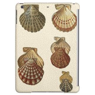 Crackled Antique Shells