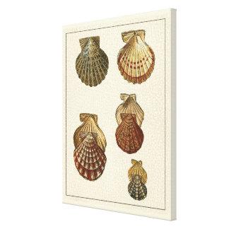 Crackled Antique Shells Canvas Print