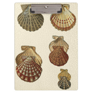 Crackled Antique Shells Clipboard