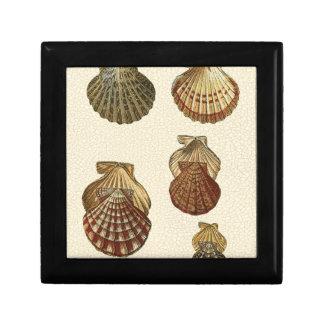 Crackled Antique Shells Gift Box