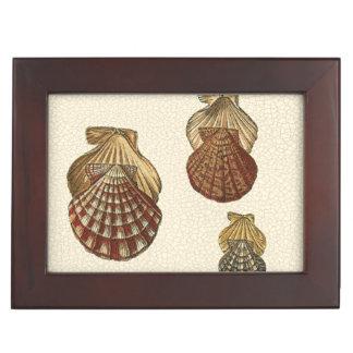 Crackled Antique Shells Keepsake Boxes