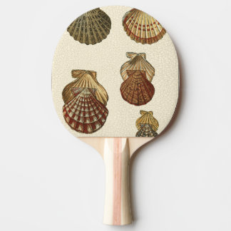 Crackled Antique Shells Ping Pong Paddle