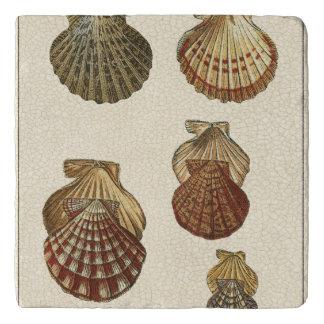 Crackled Antique Shells Trivet