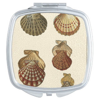 Crackled Antique Shells Vanity Mirror