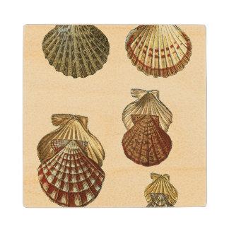 Crackled Antique Shells Wood Coaster