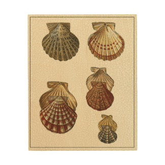 Crackled Antique Shells Wood Print