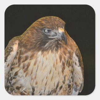 Crafty Hawk Square Sticker