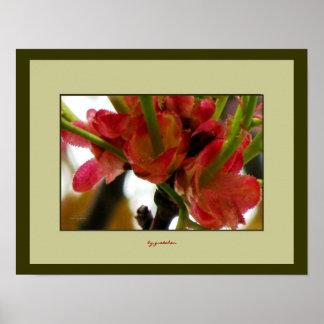 Cranberry Blossoms Base Close up 2 Poster