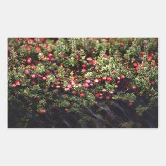 Cranberry Bog Rectangular Sticker