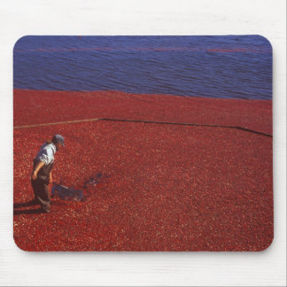 Cranberry Harvest, Middleboro, MA, USA Mouse Mat