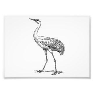 Crane Bird Drawing Photo Art