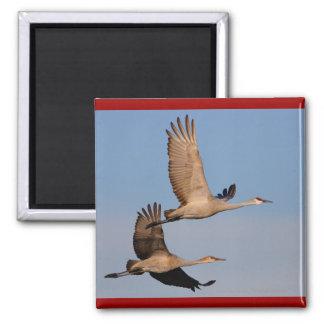 Cranes Square Magnet