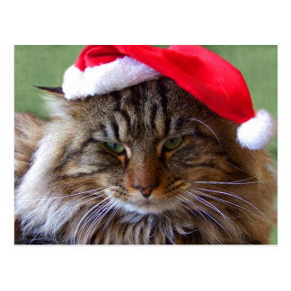 Cranky Christmas Cat Postcard