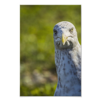 Cranky Old Seagull (Add Your Own Text) Photo