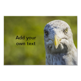 Cranky Old Seagull (Add Your Own Text) Photograph