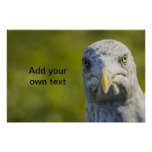 Cranky Old Seagull (Add Your Own Text) Poster