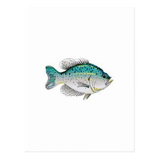 CRAPPIE FISH1 POSTCARD