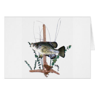 Crappie Mount Greeting Card