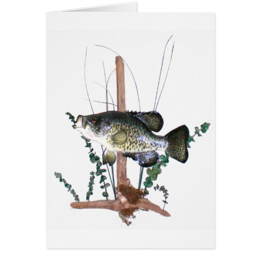 Crappie Mount Card