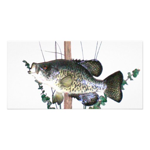 Crappie Mount Personalized Photo Card