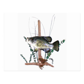 Crappie Mount Post Card