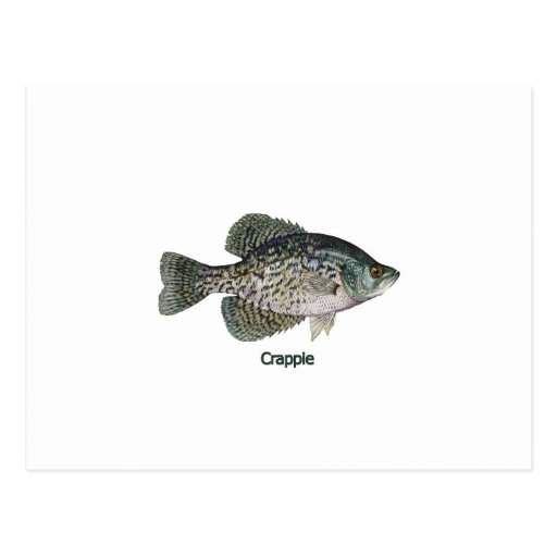 Crappie (titled) post cards