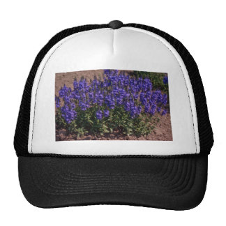 Crater Lake Blue, (Veronica) flowers Mesh Hat