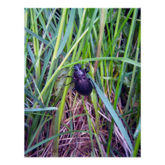 Crawling Beetle Poster