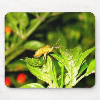 Crawling Chili Bug Mouse Pad