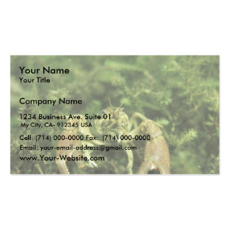 Crayfish- close-up underwater pack of standard business cards