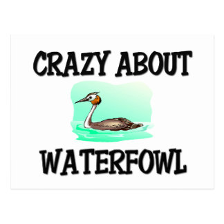Crazy About Waterfowl Post Card