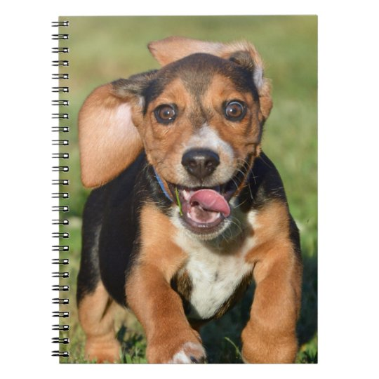 Crazy Beagle Puppy Running Notebooks