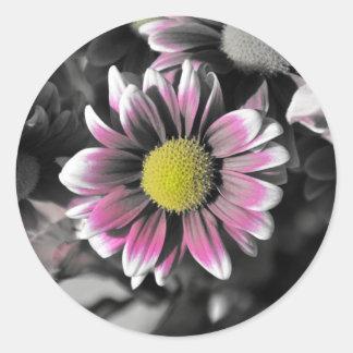 Crazy Daisy Sticker, Glossy Round Sticker