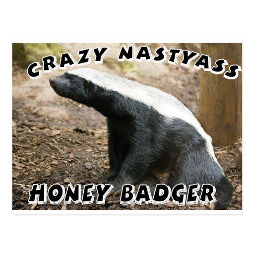 crazy honey badger postcards