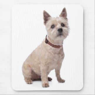 Cream Cairn Terrier Puppy Dog Love Mousepad