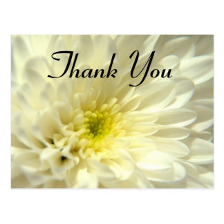 Cream Chrysanthemum - Thank You Postcard