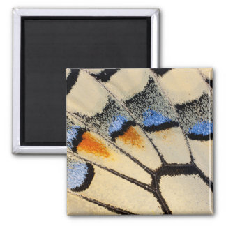 Cream color butterfly wing detail square magnet