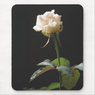 Cream-color rose on the dark background mouse pad