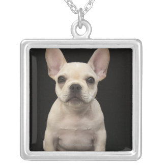 Cream colored French Bulldog puppy Silver Plated Necklace