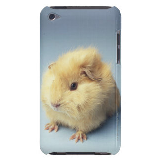 Cream colored Guinea pig Barely There iPod Covers