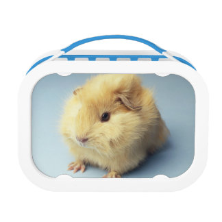 Cream colored Guinea pig Lunchboxes