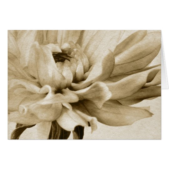 Cream Dahlia Flower - Dahlias Floral Background Card