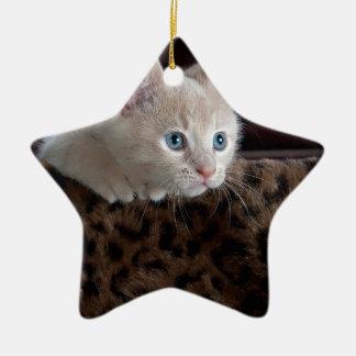 Cream Kitten with Beautiful Blue Eyes Ceramic Star Decoration