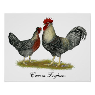 Cream Legbar Chickens Print