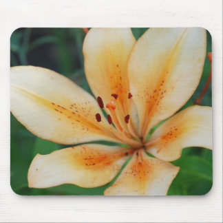 cream lily mousepads