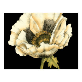 Cream Poppy Flower on Black Background Postcard