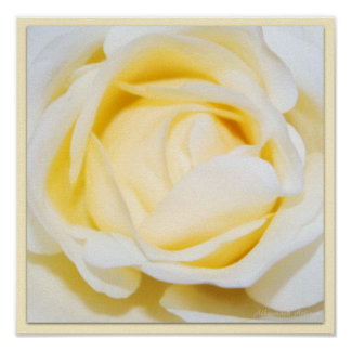 Cream Rose Floral Fine Art Photography Print